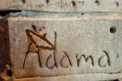 Adama-moth